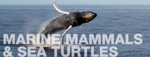 Marine Mammals & Sea Turtles