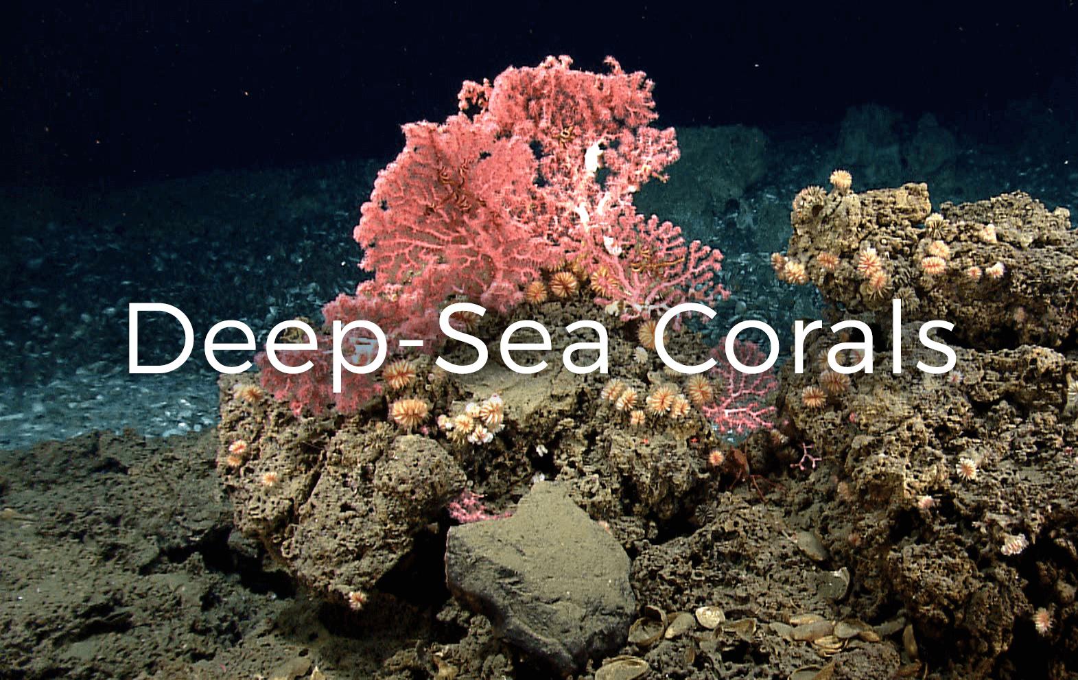 Deep Sea Corals